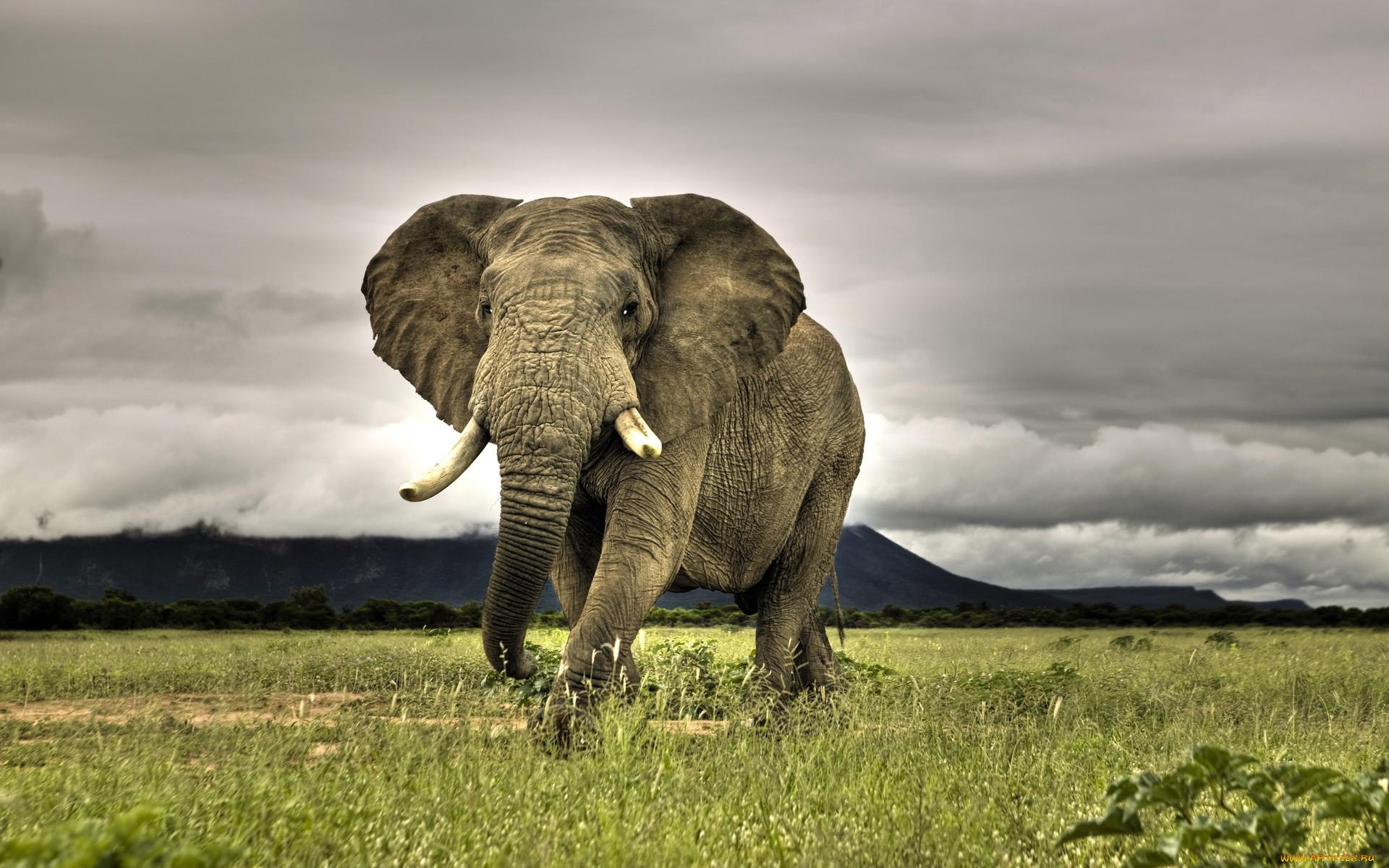 картинка самого большого животного получили реальные сроки